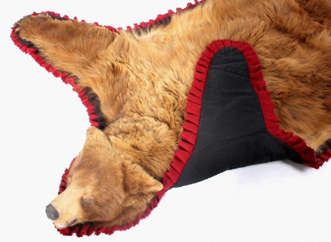 Montana Cinnamon Black Bear Taxidermy Trophy Rug - 8