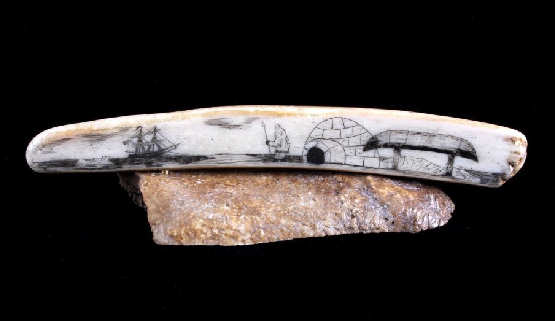 Alaskan Inuit Eskimo Walrus Tusk Scrimshaw
