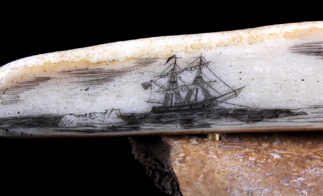 Alaskan Inuit Eskimo Walrus Tusk Scrimshaw - 2