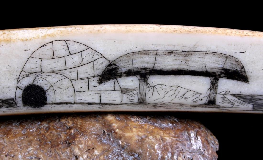 Alaskan Inuit Eskimo Walrus Tusk Scrimshaw - 4