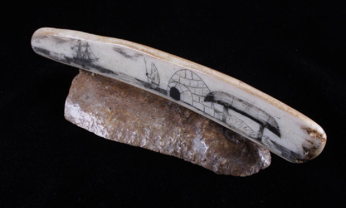 Alaskan Inuit Eskimo Walrus Tusk Scrimshaw - 6