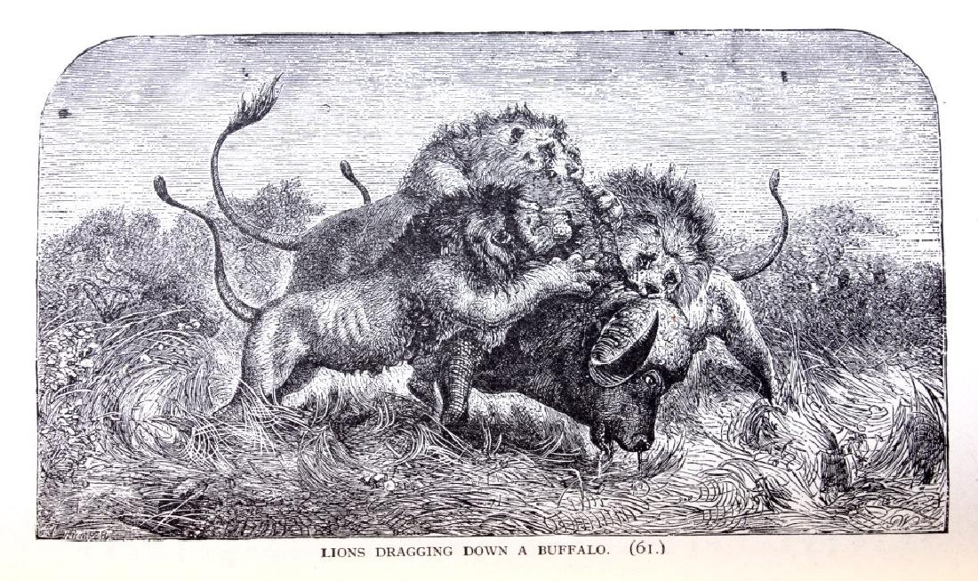 Stanley in Africa by Boyd First Edition 1889 - 6