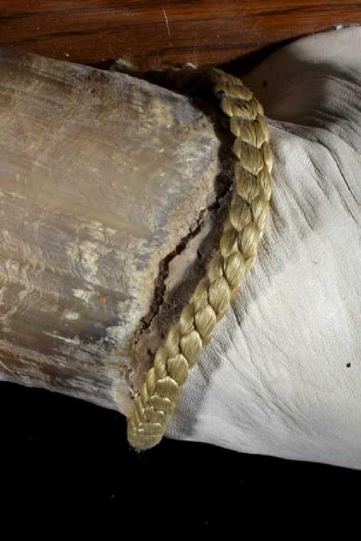 Exceptional Texas Longhorn Mounted Steer Horn Rack - 6