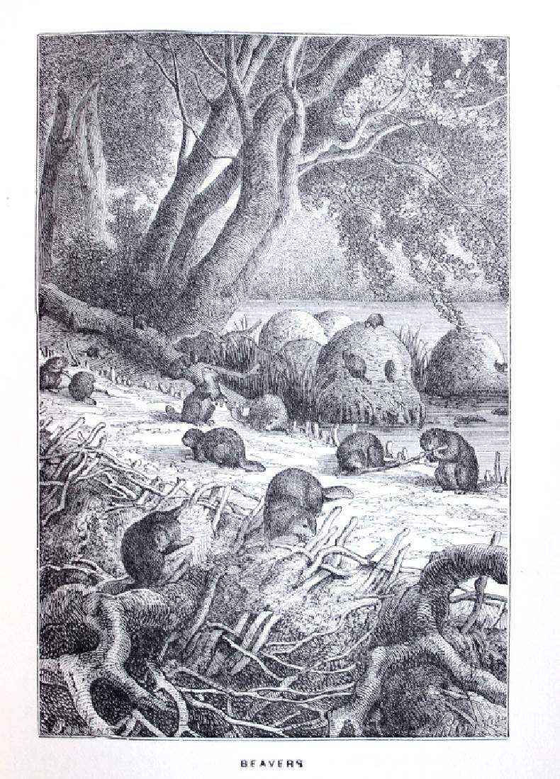 Hudson Bay First Edition by R.M. Ballantyne 1901 - 7
