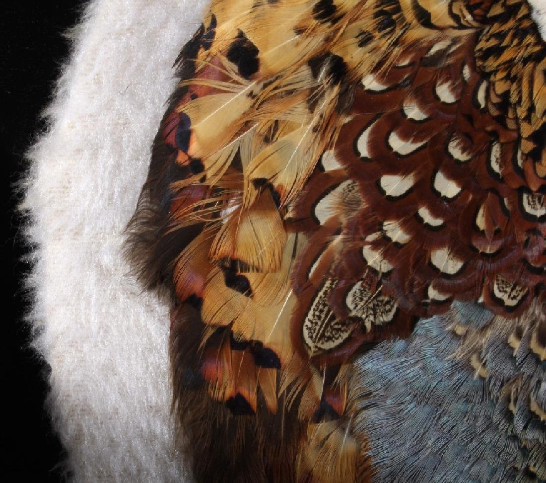 Taxidermy Flat Mount Pheasant - 6