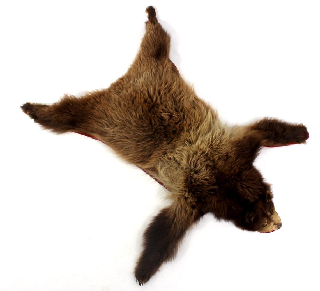 Montana Cinnamon Black Bear Fur Hide
