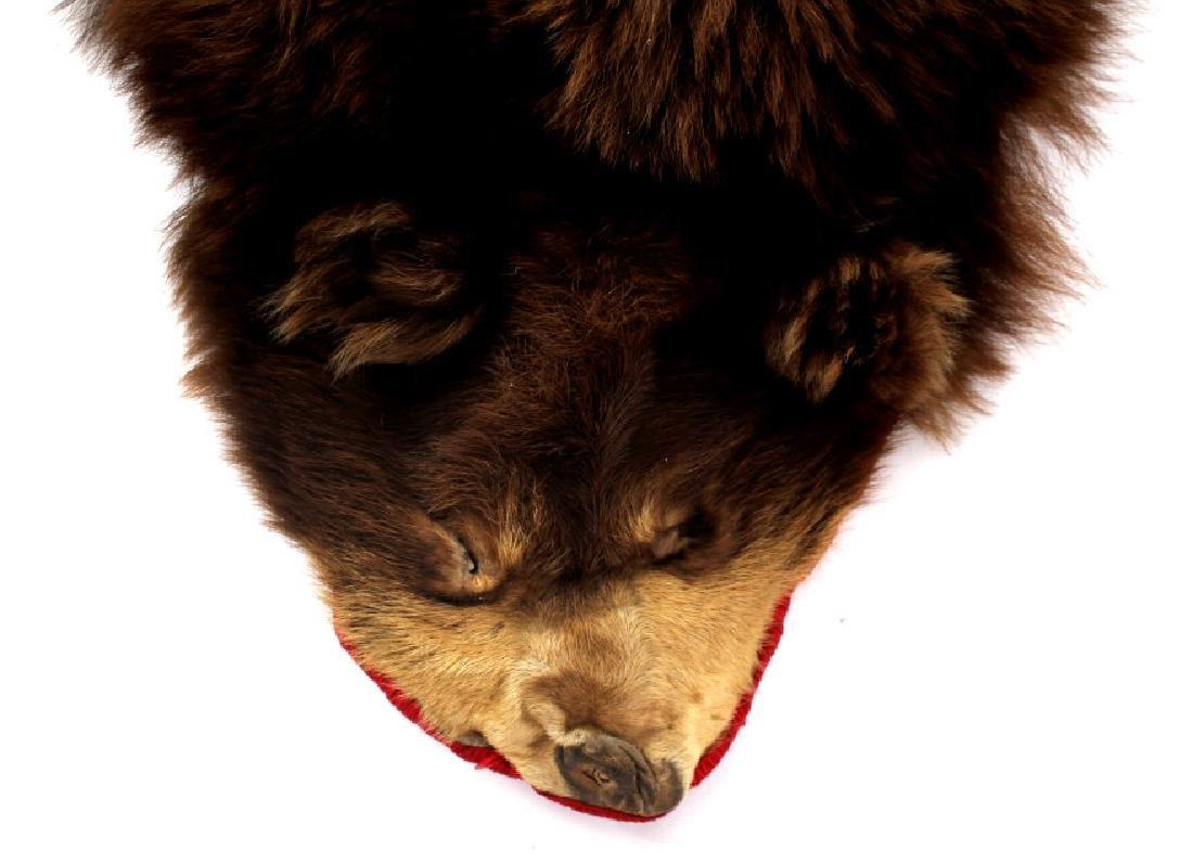 Montana Cinnamon Black Bear Fur Hide - 2