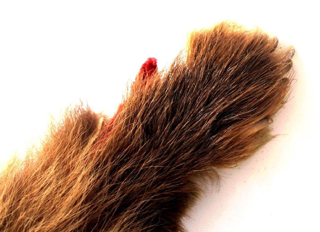 Montana Cinnamon Black Bear Fur Hide - 5