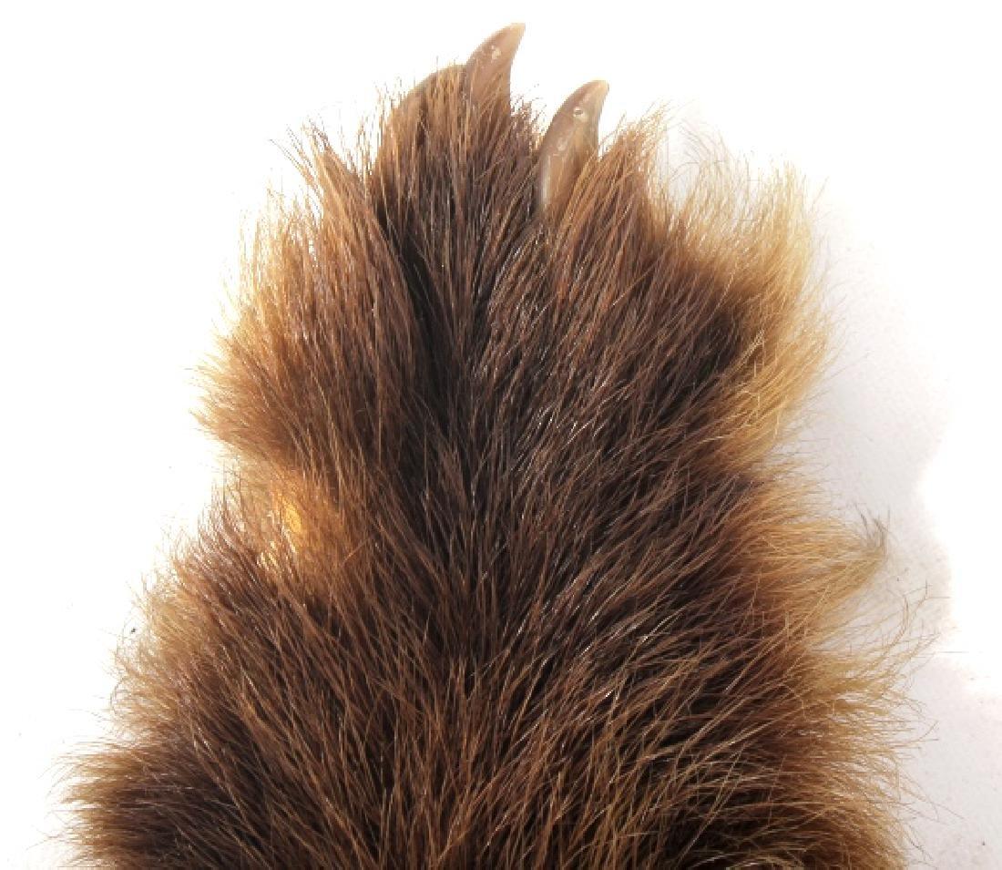 Montana Cinnamon Black Bear Fur Hide - 7