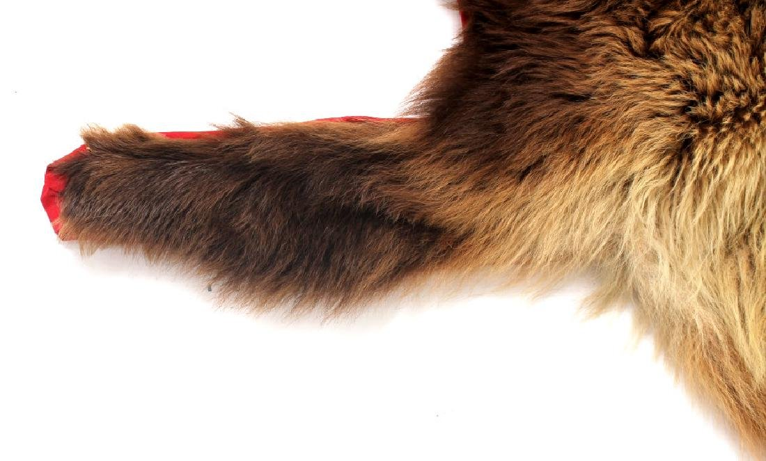Montana Cinnamon Black Bear Fur Hide - 9