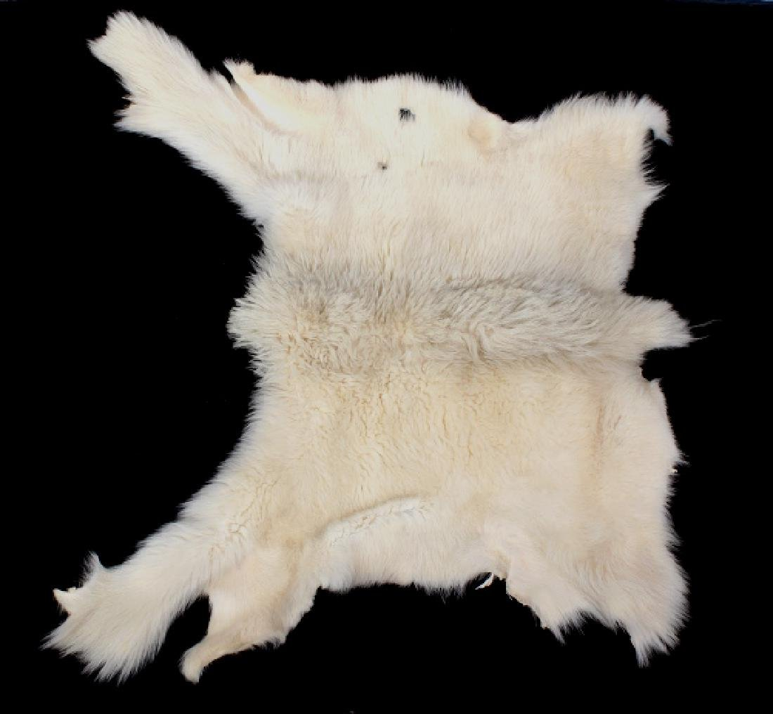 Montana Mountain Goat Taxidermy Rug