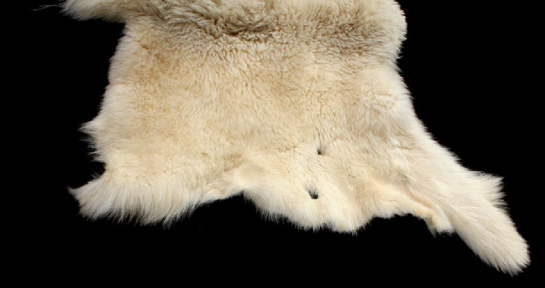 Montana Mountain Goat Taxidermy Rug - 3