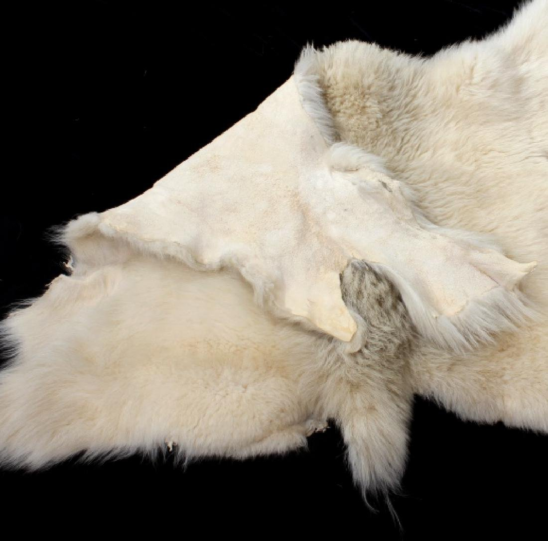 Montana Mountain Goat Taxidermy Rug - 6