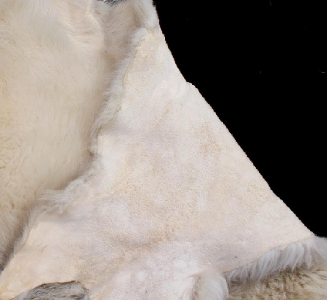 Montana Mountain Goat Taxidermy Rug - 7