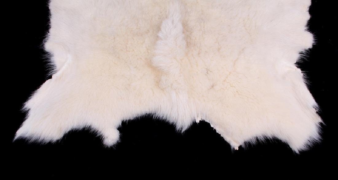 Montana Mountain Goat Taxidermy Hide Rug - 2