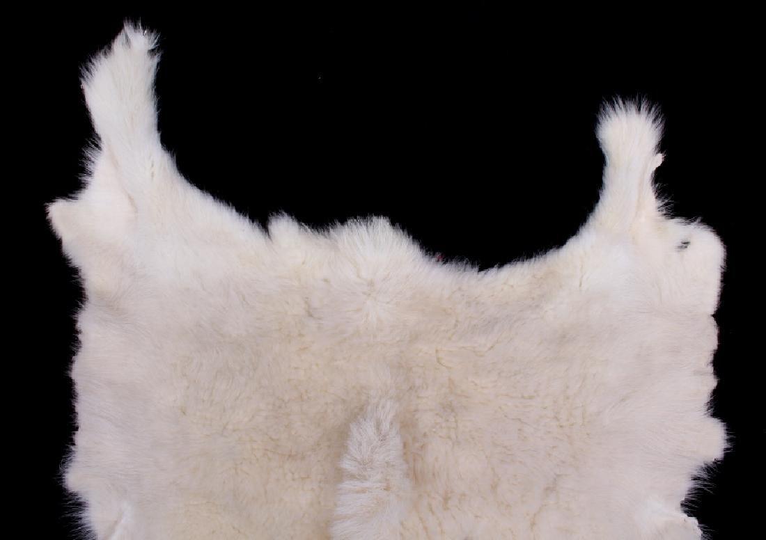 Montana Mountain Goat Taxidermy Hide Rug - 3