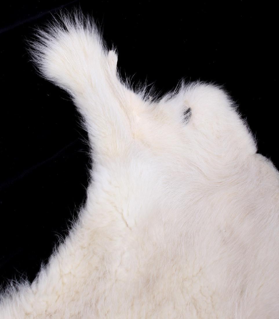 Montana Mountain Goat Taxidermy Hide Rug - 4