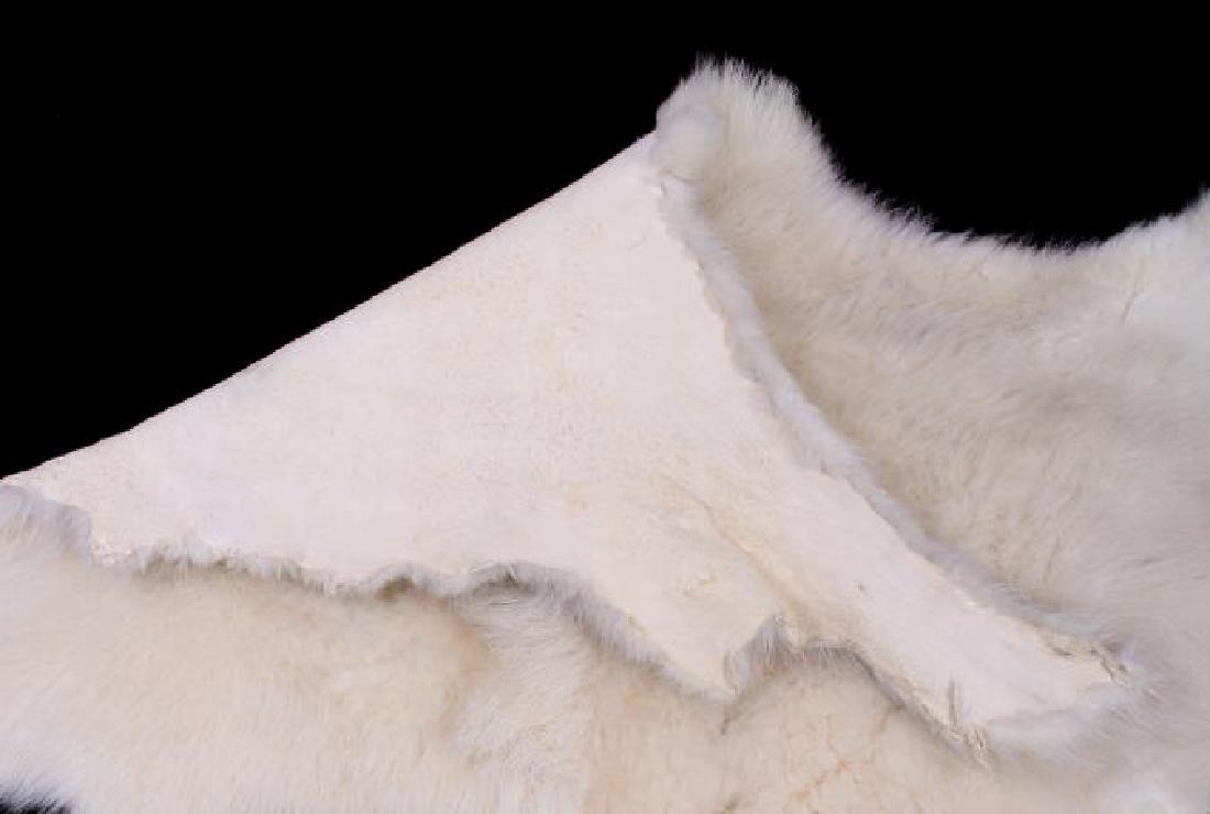 Montana Mountain Goat Taxidermy Hide Rug - 6