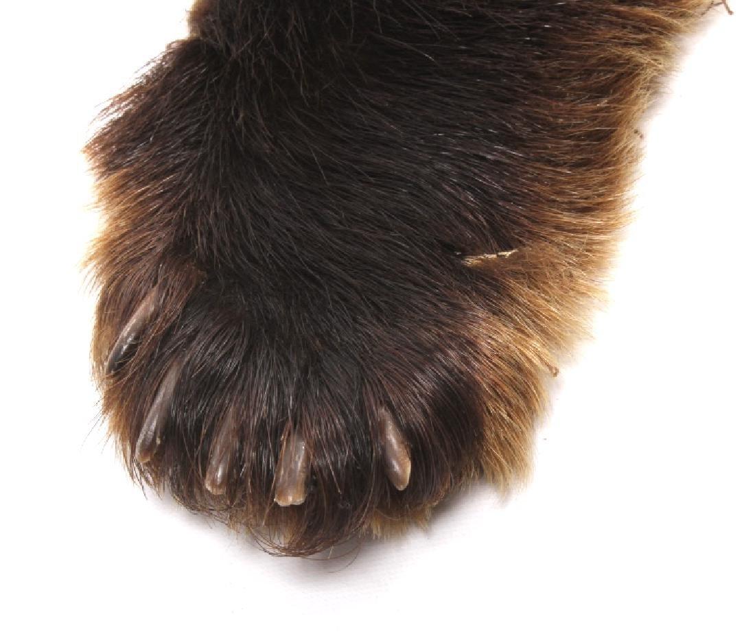 Bear Skin Shawl - 3
