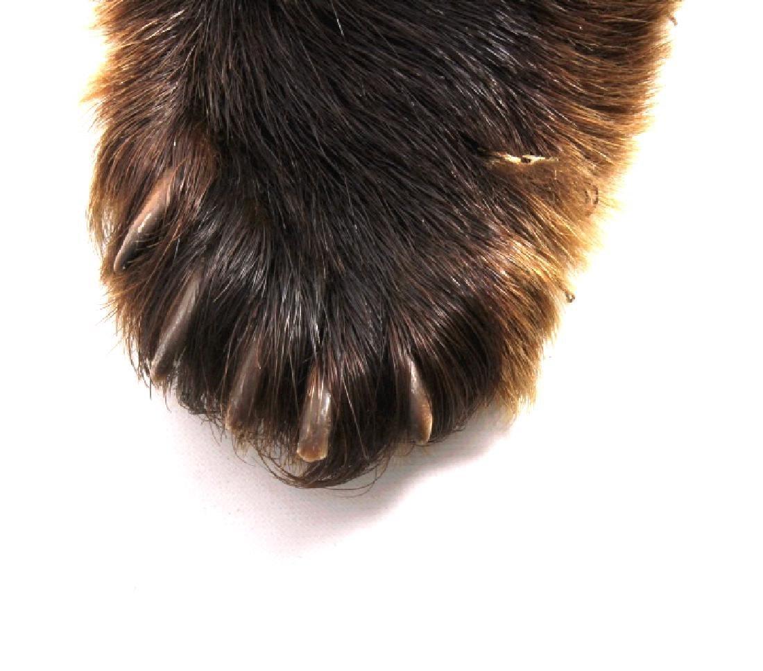 Bear Skin Shawl - 4