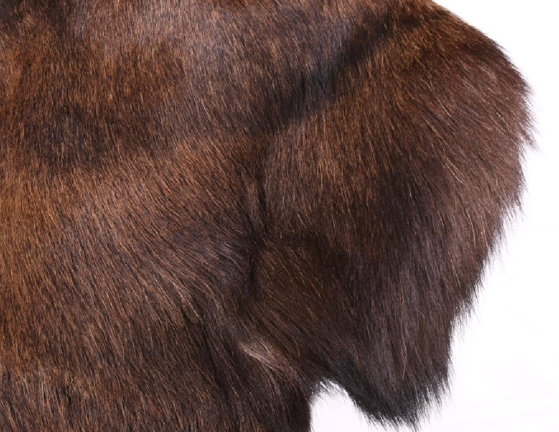 HUGE Trophy Yukon Bull Moose Shoulder Mount - 8