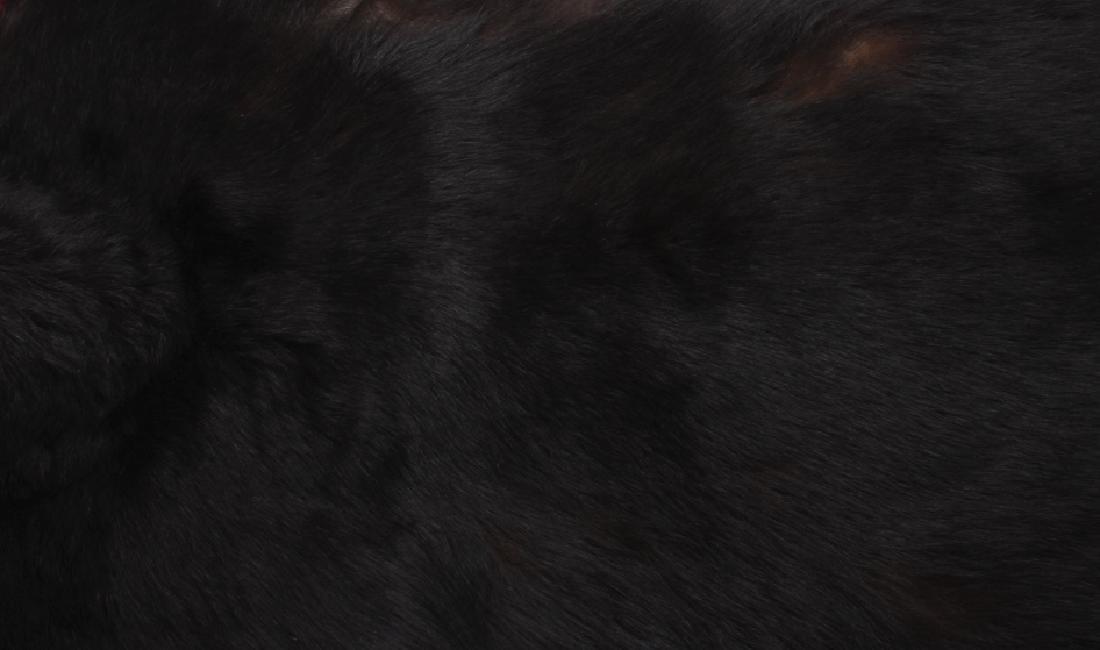 Large Trophy Black Bear Rug Mount - 10
