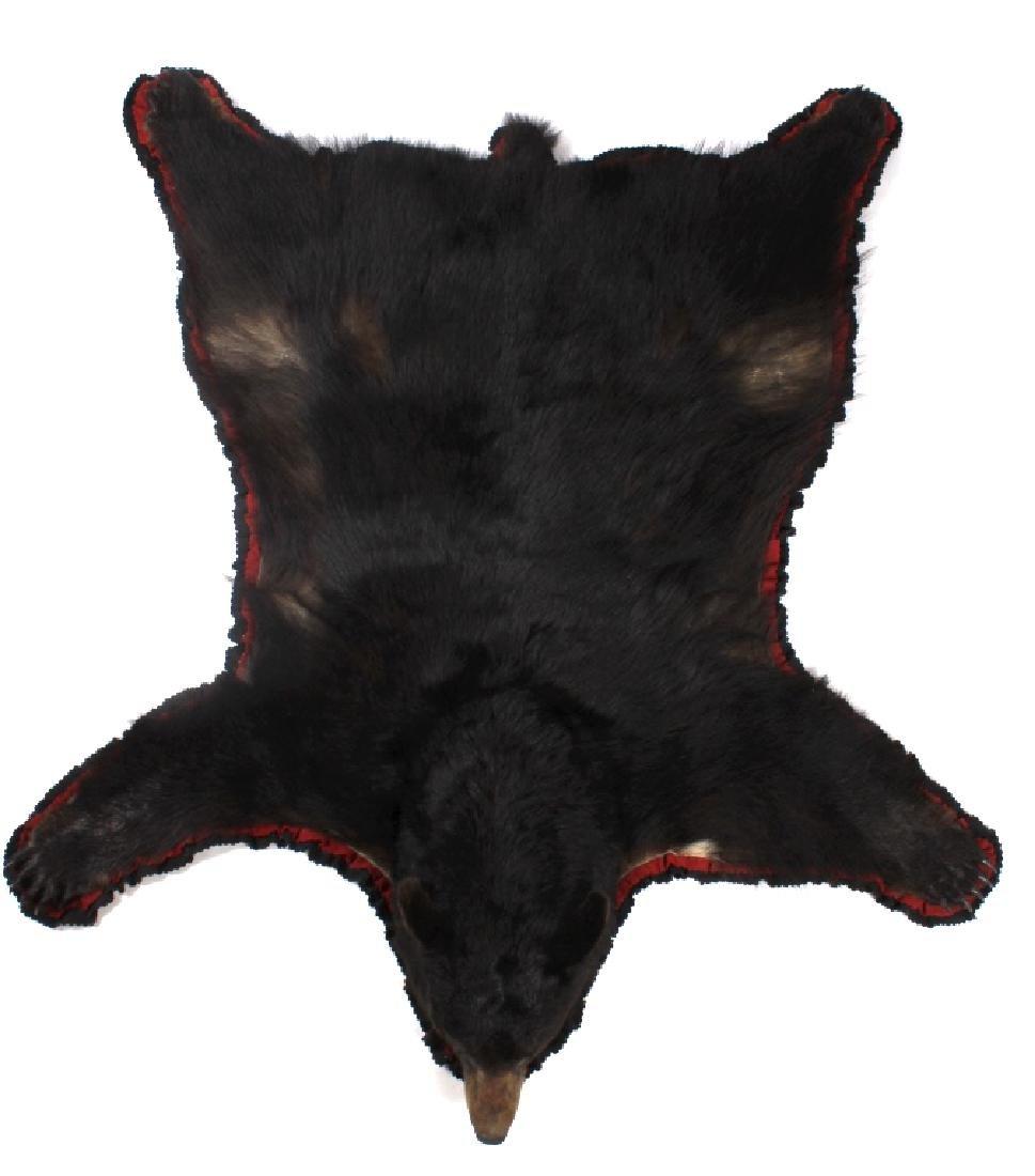 Large Trophy Black Bear Rug Mount