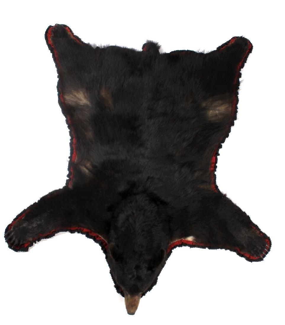 Large Trophy Black Bear Rug Mount - 3