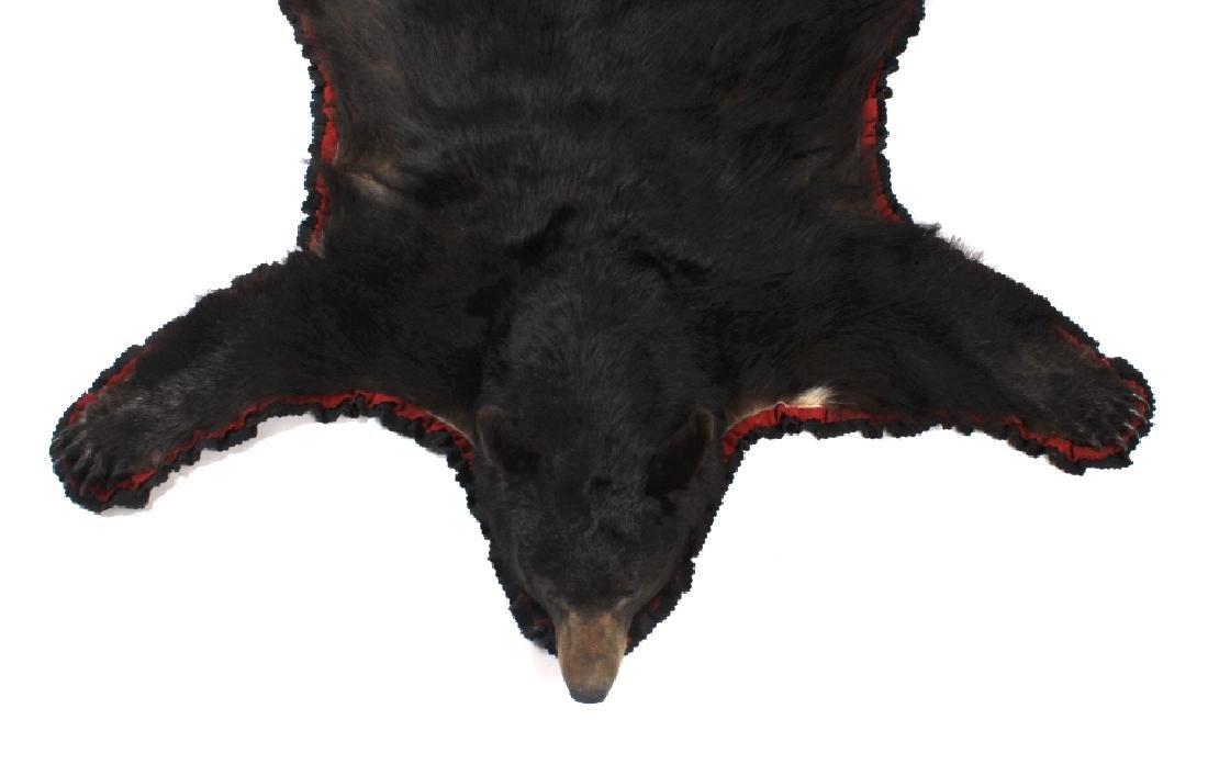 Large Trophy Black Bear Rug Mount - 4