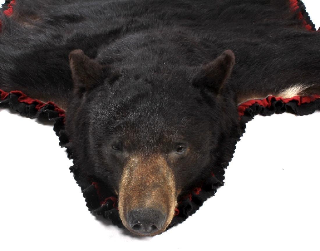 Large Trophy Black Bear Rug Mount - 6