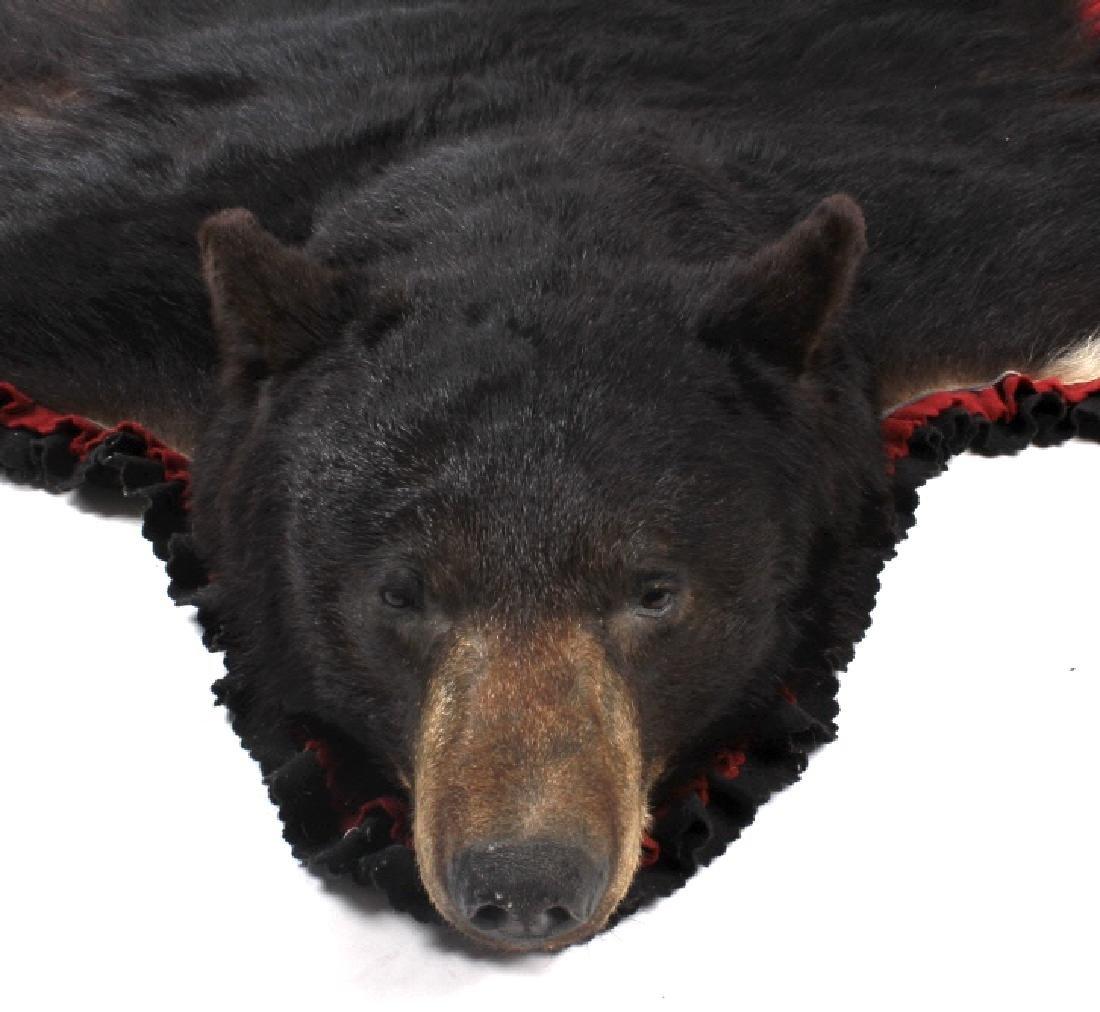 Large Trophy Black Bear Rug Mount - 7