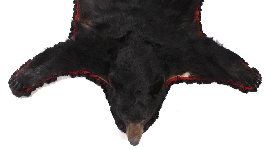 Large Trophy Black Bear Rug Mount - 9
