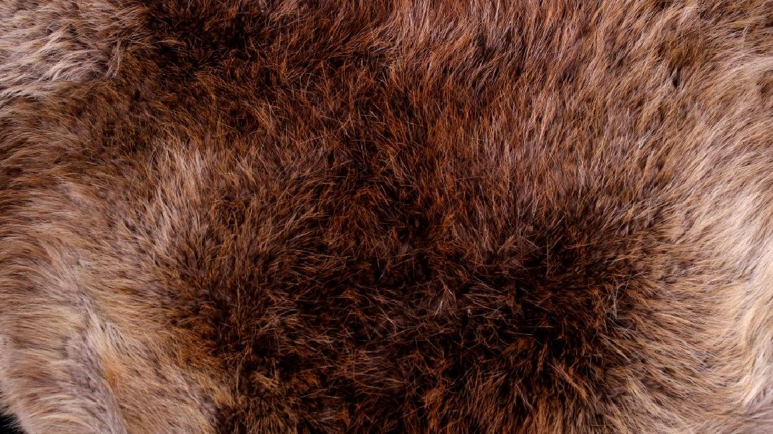 Two Tanned Montana Beaver Pelts - 2