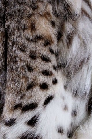 Montana Lynx Fur Vest by Lloyd's - 7