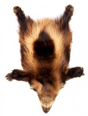 Montana Wolverine Taxidermy Rug Mount
