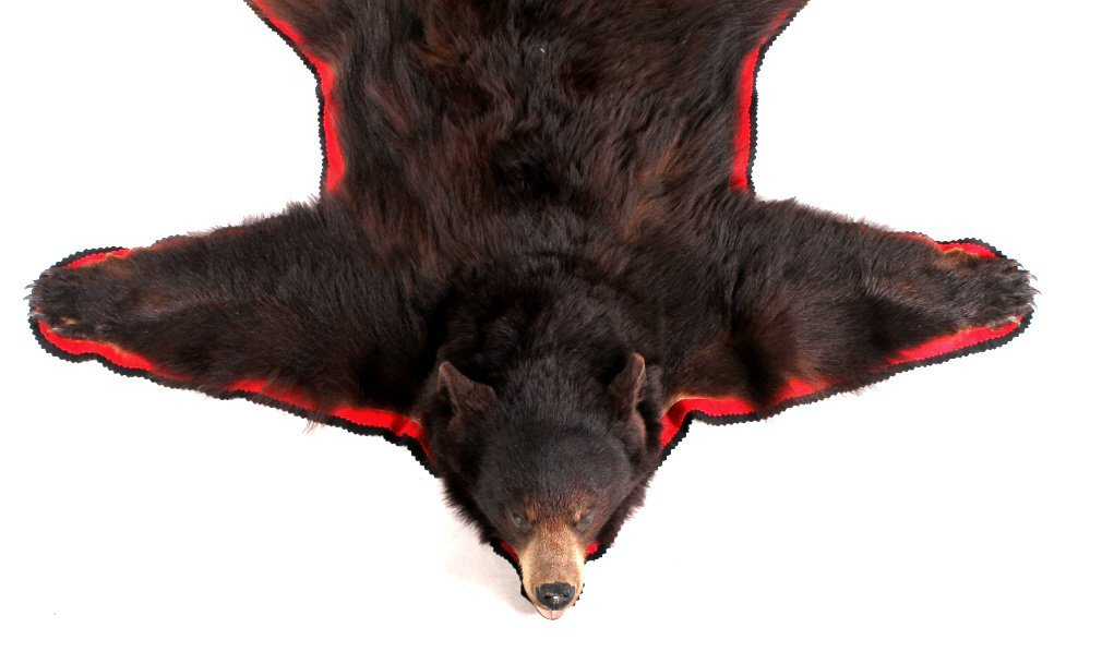 Montana Cinnamon Black Bear Trophy Rug - 3