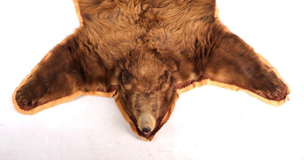 Montana Cinnamon Brown Bear Rug - 3
