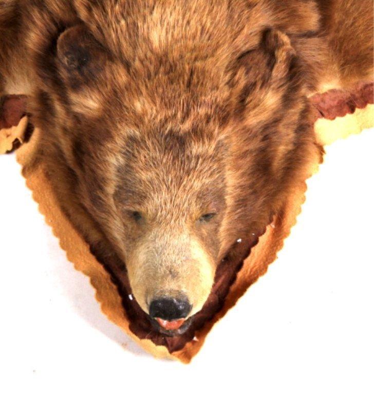Montana Cinnamon Brown Bear Rug - 5