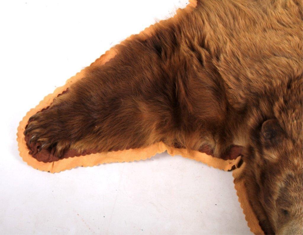 Montana Cinnamon Brown Bear Rug - 7