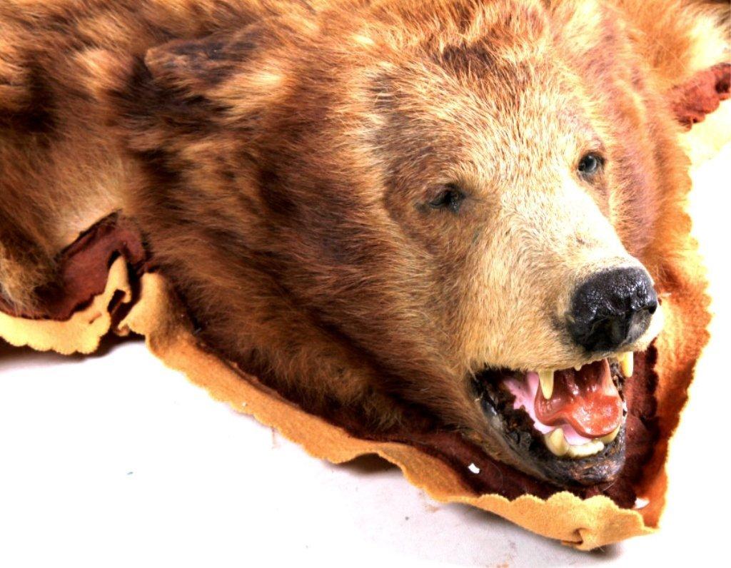 Montana Cinnamon Brown Bear Rug - 8