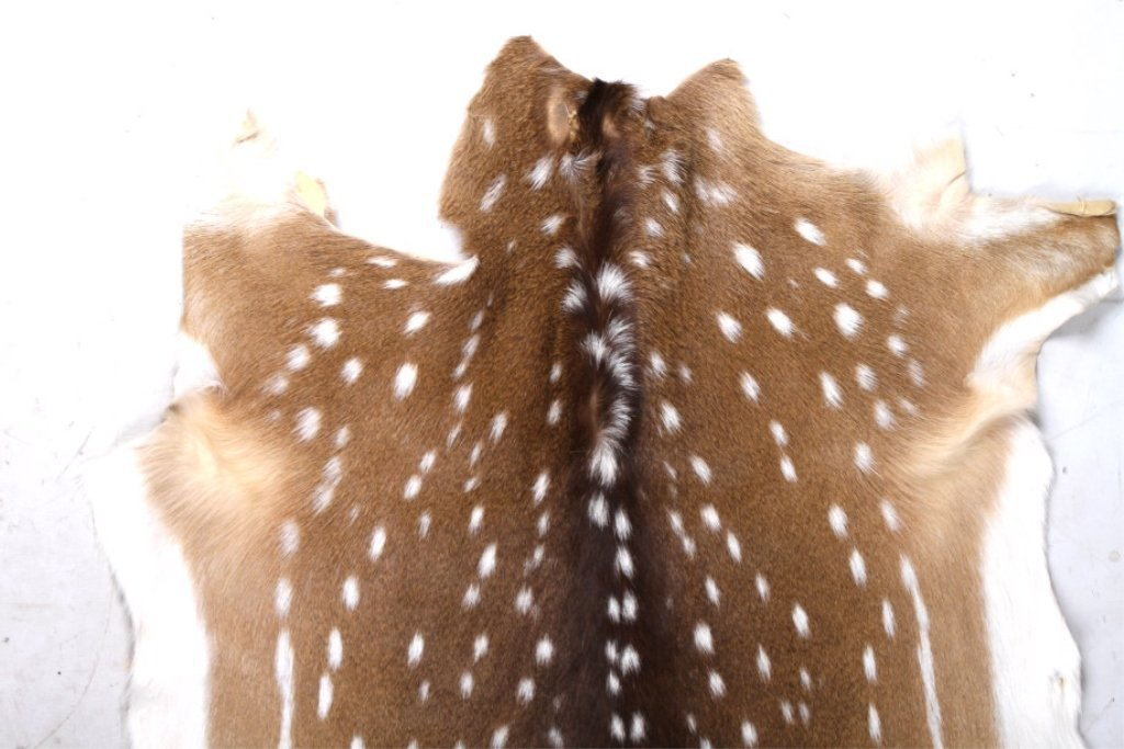 Trophy Fallow Deer Hide - 5