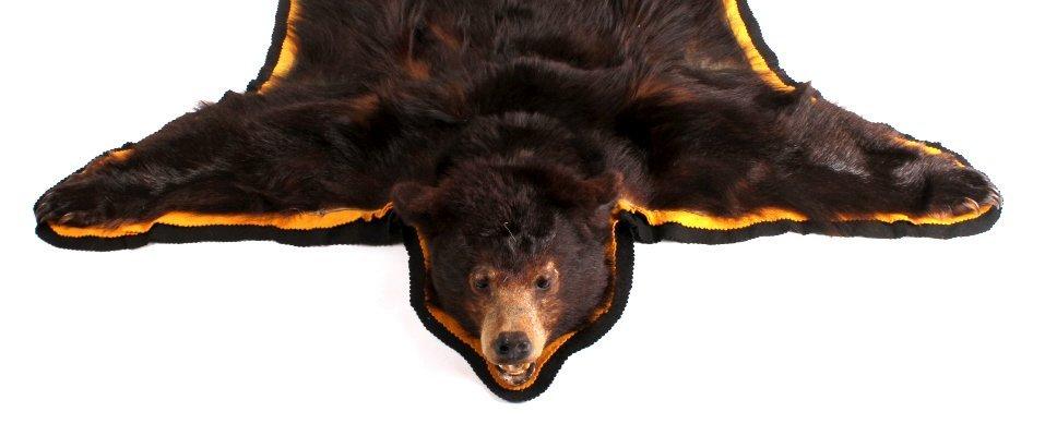 Montana Black Bear Rug - 3