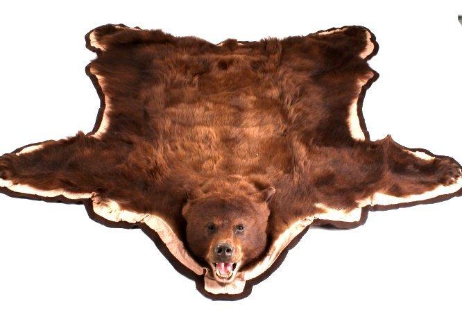 Montana Trophy Cinnamon Black Bear Rug