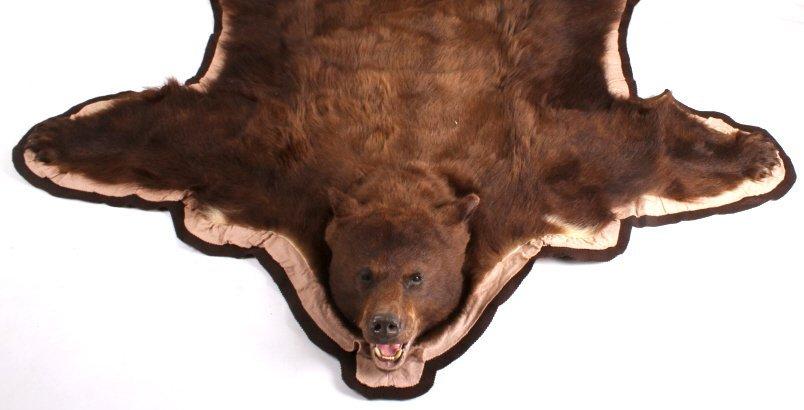 Montana Trophy Cinnamon Black Bear Rug - 2