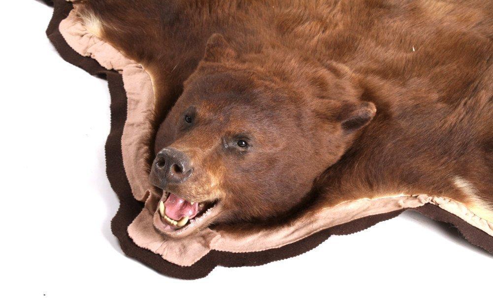 Montana Trophy Cinnamon Black Bear Rug - 4