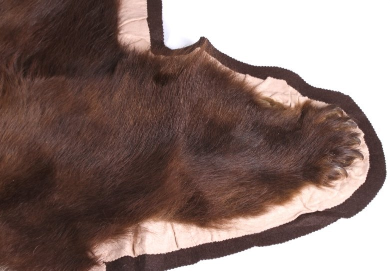 Montana Trophy Cinnamon Black Bear Rug - 6