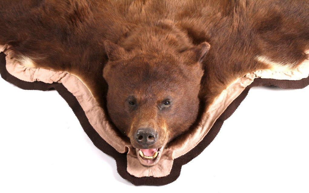 Montana Trophy Cinnamon Black Bear Rug - 7
