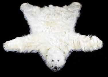 Excellent Large Polar Bear Taxidermy Rug Mount