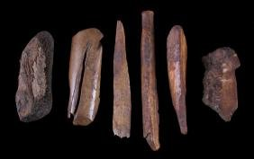 Ancient Mammoth Ivory Tusk Collection