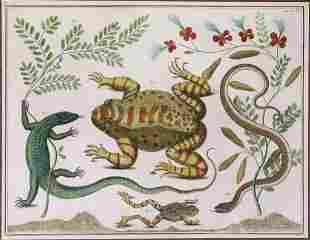 Mid-18th Century Natural History Print